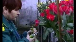 видео Цветы по прежнему лучший подарок!