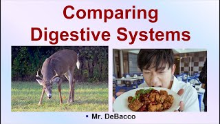 Comparing Digestive Systems