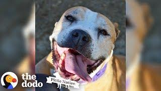 Senior Rescue Pittie Smiles So Much That She Sneezes | The Dodo Pittie Nation
