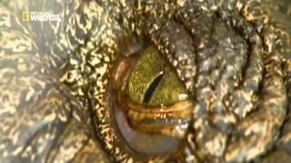 Гиганты мира животных - Самый большой крокодил