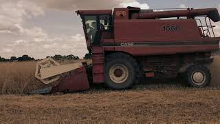 Case Axial Flow 1660 Żniwa 2019