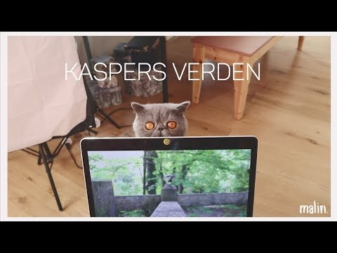 KASPERS VERDEN (VIDEO 4 CRAZY CAT LADIES AND GENTS)