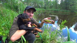 Рыбалка на пруду в старом лагере. Ловля руками в лесных заливах