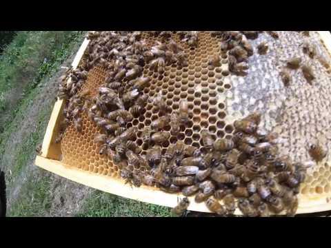 APICOLTURA:  Come allevare le api