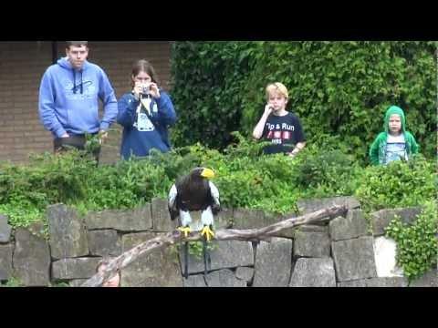 Avifauna - Vogel demonstratie - Wereldvogels deel 2