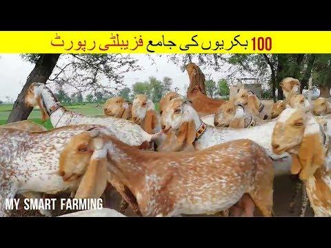 28 | Feasibility report of 100 goats | ﺑﮑﺮﯾﻮﮞ ﮐﯽ ﺟﺎﻣﻊ ﻓﺰﯾﺒﻠﭩﯽ ﺭﭘﻮﺭﭦ | Gat  Farming