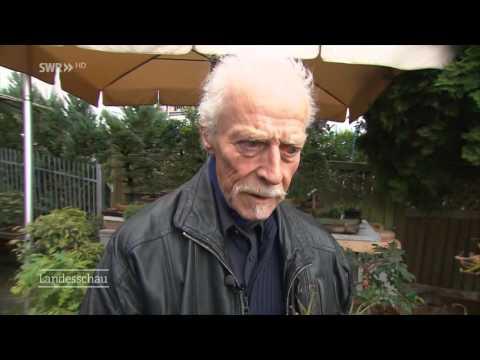 Bonsaikultur in Grötzingen: Ein Mann und seine Miniatur-Bäume