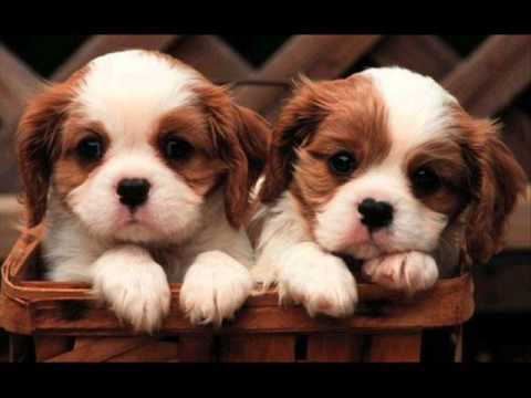 Who Let the Dogs out ? Cute and adorable puppies