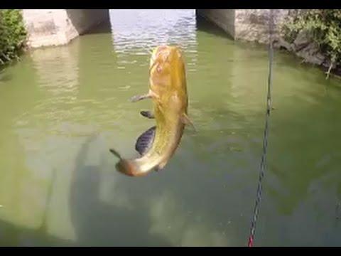 Les lacs dans le taïga la pêche
