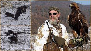 Hari Herak - Wild Boar Hunting with Eagle - Wildschweinjagd mit Adler