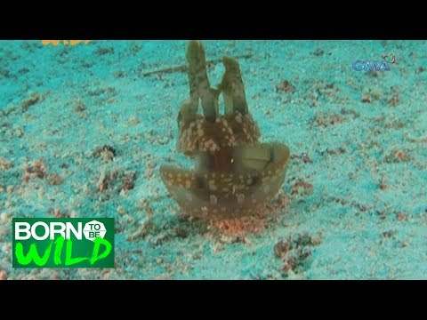 Born to Be Wild: Different creatures dancing underwater