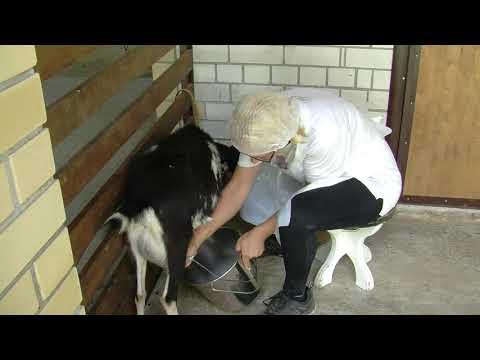 Коза Ряба даёт молоко, Санаторий Солнечный