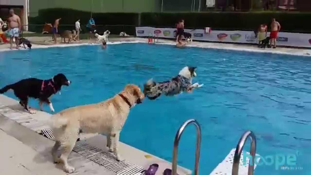 al agua patas 2015 d a de piscina para perros youtube