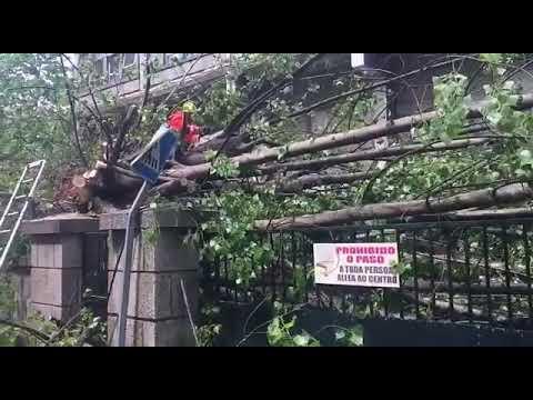 Cae un árbol a las puertas del IES Castro Alobre de Vilagarcía