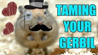 How To Tame Your Gerbil