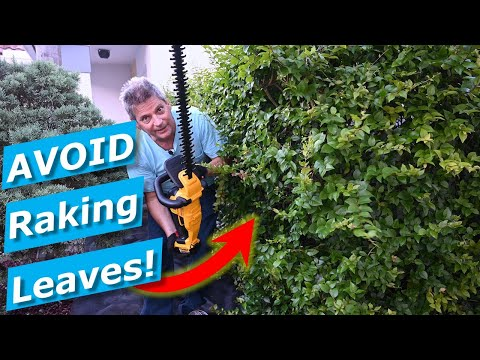 Hedge Trimming Cleanup Hacks:  Avoid Raking Leaves, Clippings DeWalt Trimmer
