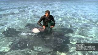 Hand feeding Stingrays