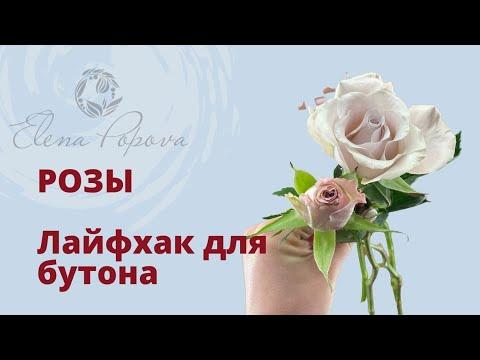 Розы бутоны. Лайфхак. Как помочь распуститься бутону розы своими руками. Флористика