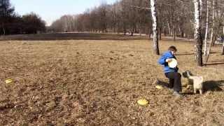 Фризби Вебстайл 2014 Людмила и пшеничный терьер Бася