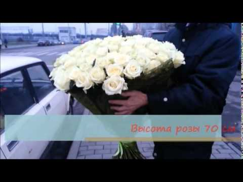 PROSTOROZA.RU - 101 белая роза (70 см) - YouTube
