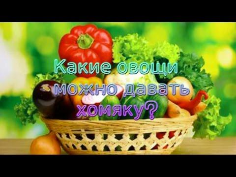 Какие овощи можно давать хомяку?