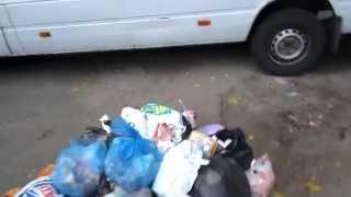 Днепркомунтранс поздравляет новобрачных кучей мусора