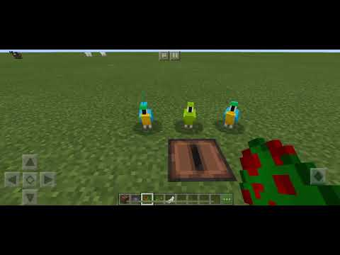 How To Make Parrots Dance In Minecraft