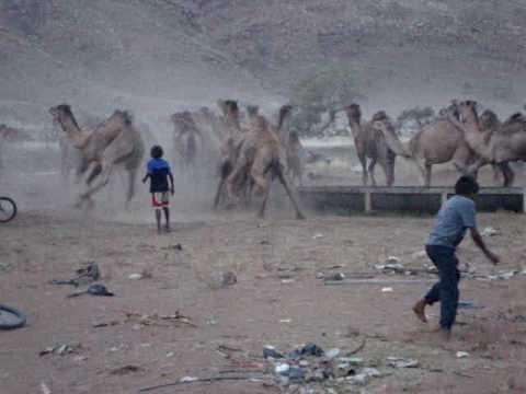 Pipalyatjara-Chasing Camels.MPG