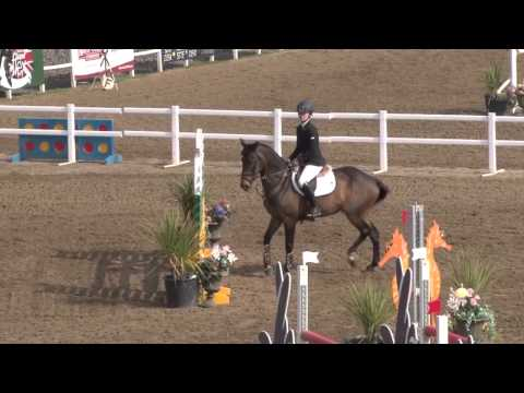 Showjumping Pony Viewing Trial