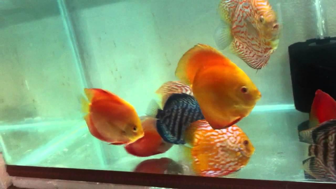 Fish for aquarium in kolkata - Fish For Aquarium In Kolkata