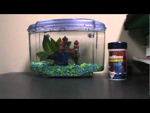 Image result for fish in dorms