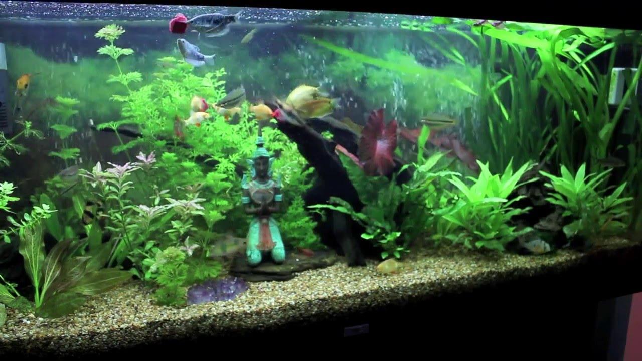 Häufig Planted Aquarium Update 24/5/10 (Juwel Rio 240 + Co2 Setup + EV22