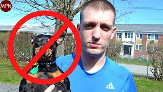 5 REAL Reasons not to get a Miniature Pinscher!