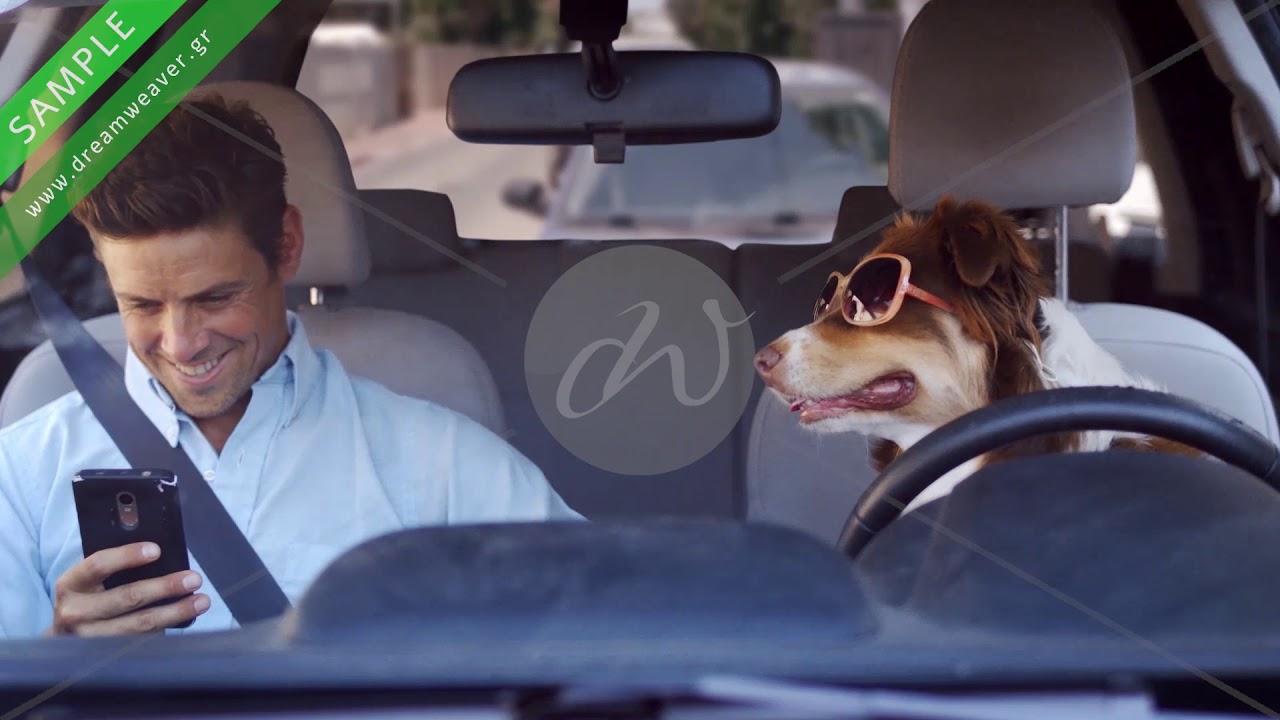 Ζώα και διαφήμιση