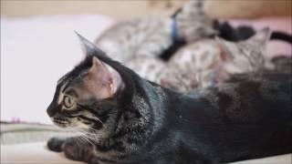 Lelu & Diego's kittens at 7 weeks