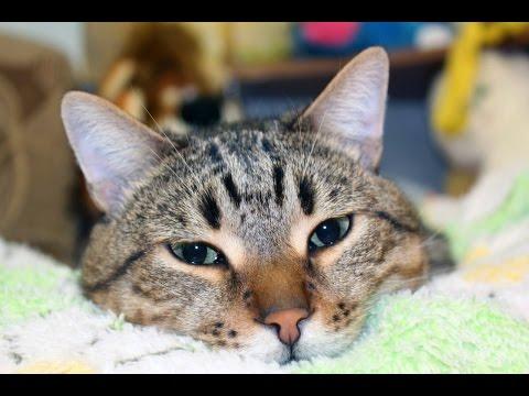 коты ржака ютуб