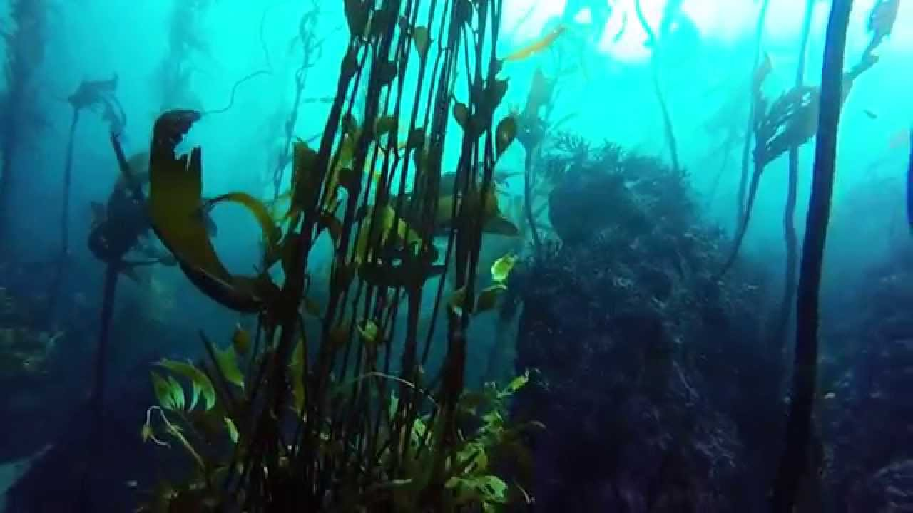 Gopro Point Lobos Scuba Diving And Monterey Bay Kayaking Youtube