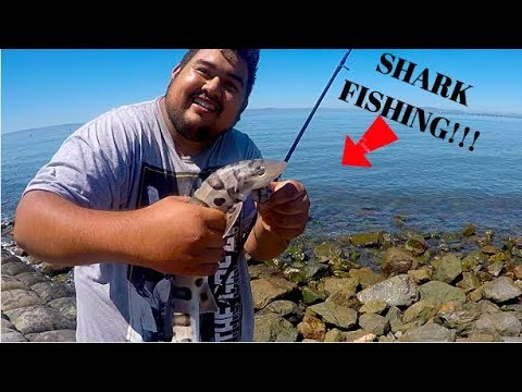 San Leandro (MARINA) CA, SHARK Fishing!!!