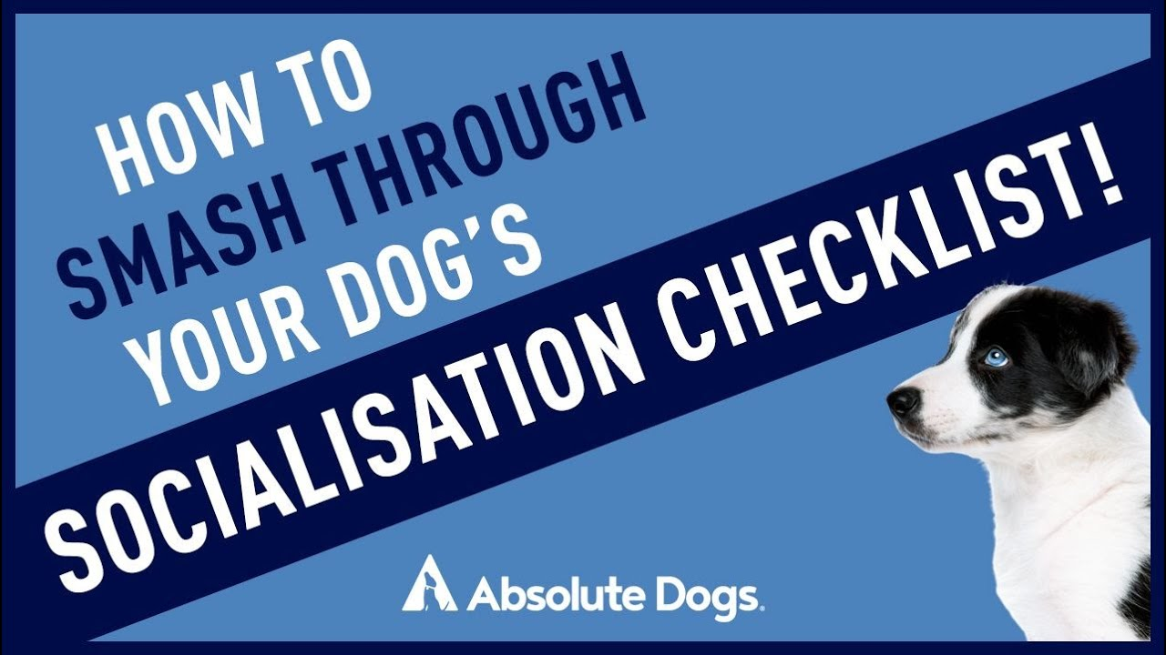 Training Resource: How to Smash Through Your Puppy's Socialization