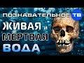 Живая и мёртвая вода древних славян (Познавательное ТВ, Артём Войтенков)