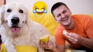 My Funny Dog and I Eat Lemon [The Most Sour Video]