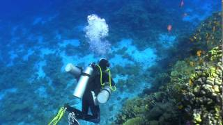 VIAGGIO SUB IN MAR ROSSO: immersione subacquea nella barriera corallina