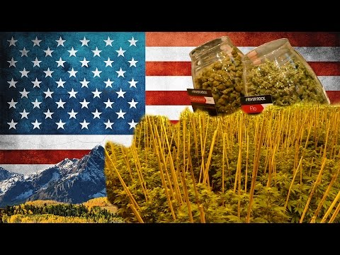 So wird legales Cannabis unter 250.000W angebaut - River Rock Colorado | DHV USA Tour 2015 Part 2/10