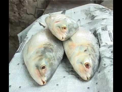 Farhan Effendi Package About PALLA FISH At Hyderabad