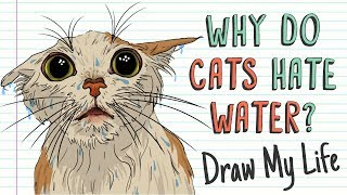 WHY DO CATS HATE WATER? 🙀💦 | Draw My Life