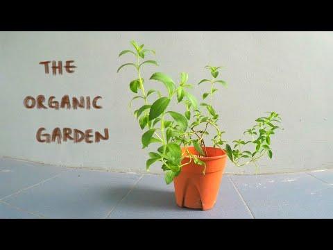 How to start gardening in a HDB Flat | Growing my own organic garden in Singapore