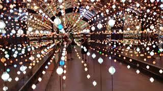 LED 빛의 향연(4)