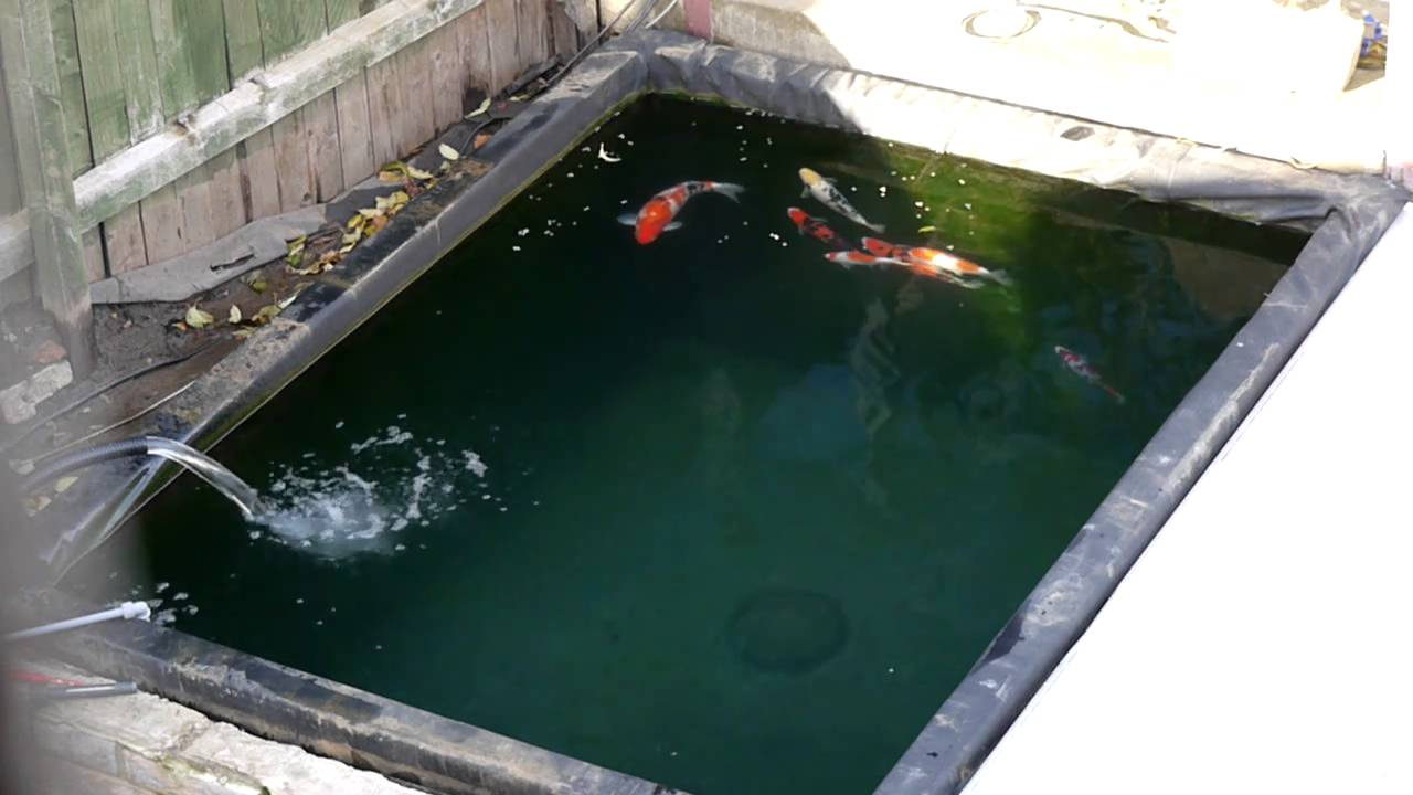 My nishikigoi koi pond in winter youtube for Koi pond temperature winter