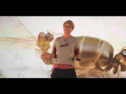 How Invasive Ants Dominate Ecosystems  Dr Kirsti Abbott  TEDxSydneySalon