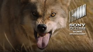 WOLF TOTEM: Available on Blu-ray and DVD December 15!